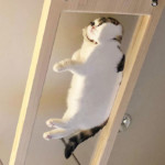 49 Funny Pictures Of Cats On Glass