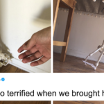 """Guy """"Adopts"""" A Terrified Skeleton, Hilariously Documents How It Becomes A Family Member"""