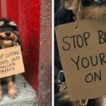 Dog Protests Annoying Everyday Things With Funny Signs (12 Pics)