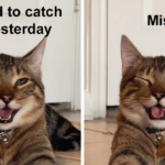 Smiling Cat Pic is Turned Into A Meme (21 Pics)