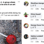 This Hilarious Facebook Group Pretends To Be An Ant Colony