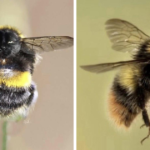 17 People Create Funny Animal Hybrids By Photoshopping Cat Heads Onto Bees