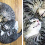 People Are Posting Cats Sleeping Together In The Weirdest Positions And Forming New Shapes (53 Pics)