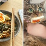 46 Pet-Thieves That Were Caught Red-Pawed When Stealing Food