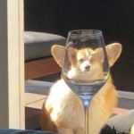 People Are Sharing Hilarious Distorted Pictures Of Animals Through Glasses (42 Pics)