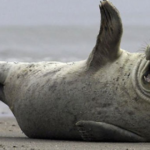 44 Seals Who Overheard The Best Joke Ever