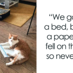 139 Cats Who Would Rather Sleep Anywhere Else Than In Their Bed
