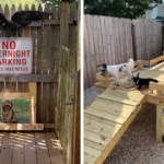 People On Facebook Are Sharing All The Cool Stuff They Did For Their Dogs (31 Pics)