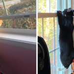 50 Photos Capturing Nosey Pets Spying On Their Neighbors