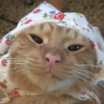 This Online Group Is Dedicated To Collecting Cats As Babushkas, And Here Are 60 Of The Best Ones