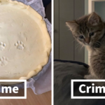 19 Pet Owners Share Pics Of Crimes And The Furry Criminals Behind Them