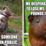 17 Funny Pet Memes About Quarantine By Comedy Pet Photo Awards