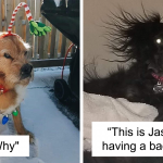People Are Sharing The Most Unflattering Pics Of Their Dogs And It's Hilarious (50 New Pics)